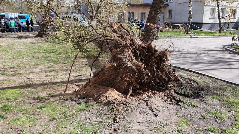 Как Москва пережила ураганный ветер и ливни 6 мая