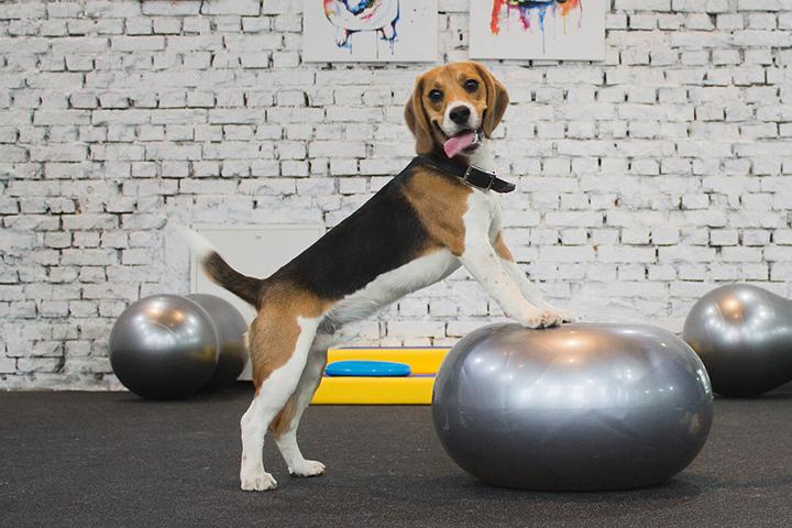 «Все как у людей»: как работают фитнес-центры для животных в Москве