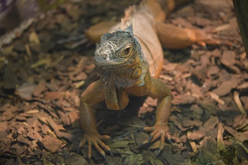 Москвичам рассказали, где в столице лечат экзотических животных