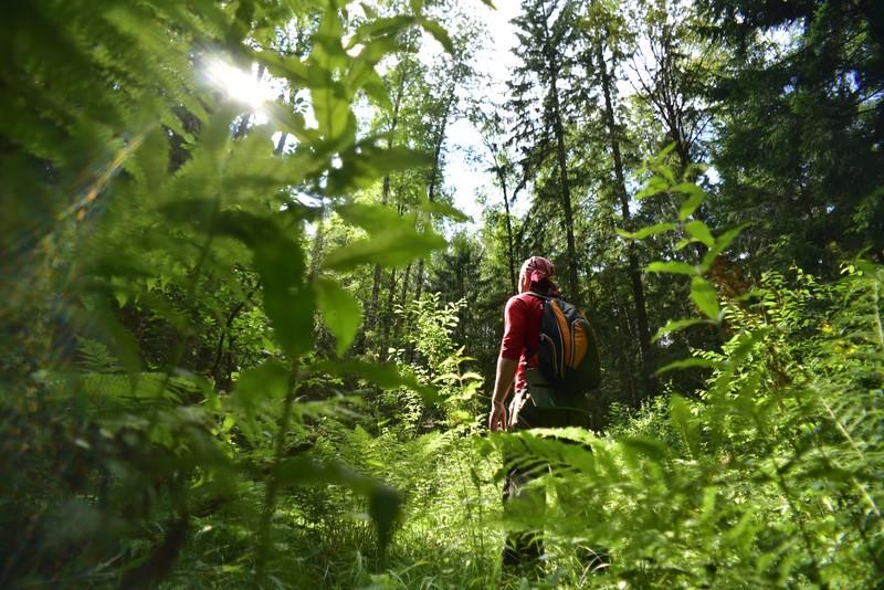 Что нужно знать, отправляясь в лес завесенними грибами